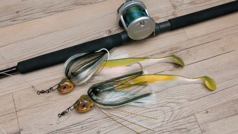Get Started With Mojo rigs