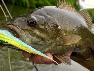 Sayers Lake smallmouth bass