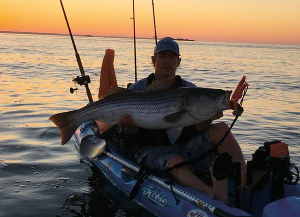 Mike Kelley pulled this striper off a rocky jetty with a live bunker