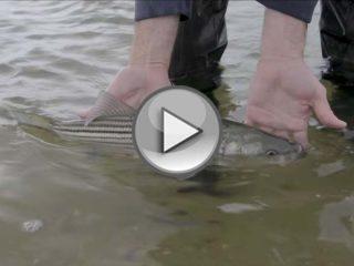OTW Shorts – Sea Lice