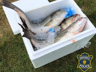 Cape Cod Canal-poachers