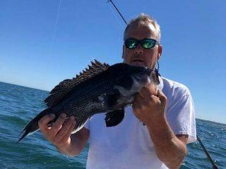 Block Island sea bass