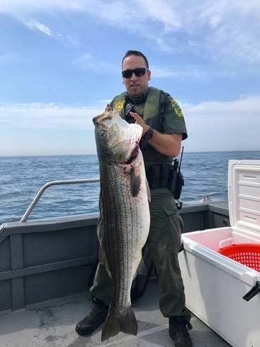 DLE Police Officer with seized illegal striped bass