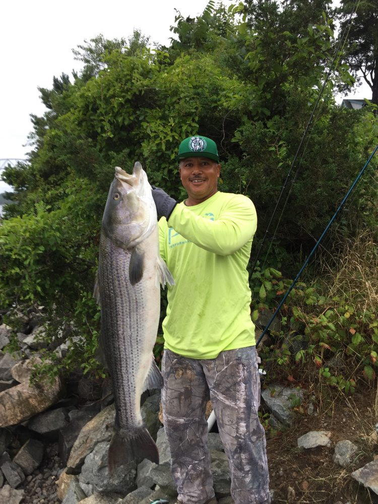 Cape cod fishing report september 6 2018 on the water for Cod fishing ri