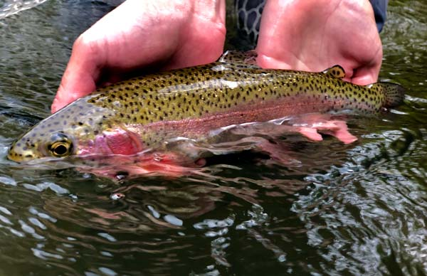 A Spring Tradition - Opening Day of New Jersey Trout Season