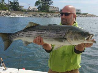 NH striped bass