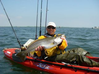 In the spring, weakfish feed on larger baits