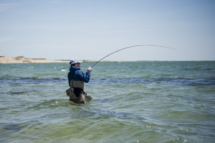 Pat O'Donnell hooked up with a Cape Cod striped bass on a fly-rod.