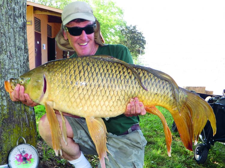 This rare fantail common carp was landed in the Connecticut River in Connecticut. It hit a combo bait of artificial and real corn.