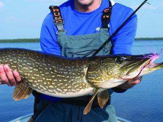 Saskatchewan Pike Fly Fishing