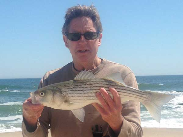 first beach striped bass of the season