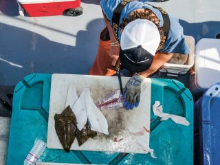 Headboat mates take great care when cleaning fish