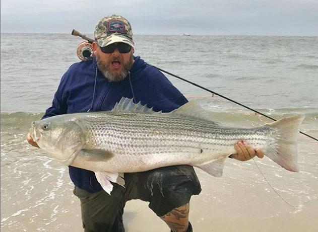 Big striped bass on the fly