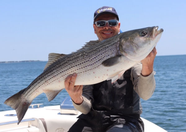 Boston Harbor striped bass