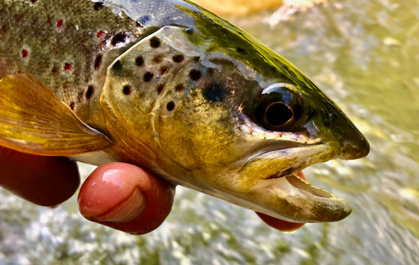 Pennsylvania Fishing Report – July 3, 2019 - On The Water