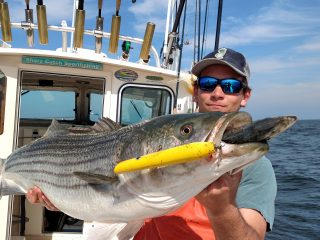 Big striped bass on pencil popper