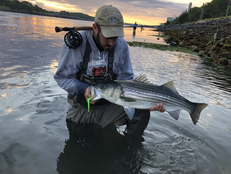 Striper on the fly