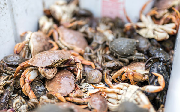 white-legger crabs