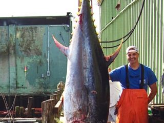 Tom Ciulla with 110-inches of tuna