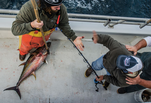 Yellowfin on spin