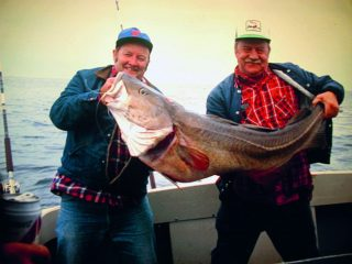 A 65-pound cod caught at Stellwagen Bank in the 70's.