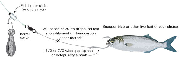 FISH-FINDER / LIVE BAIT RIG