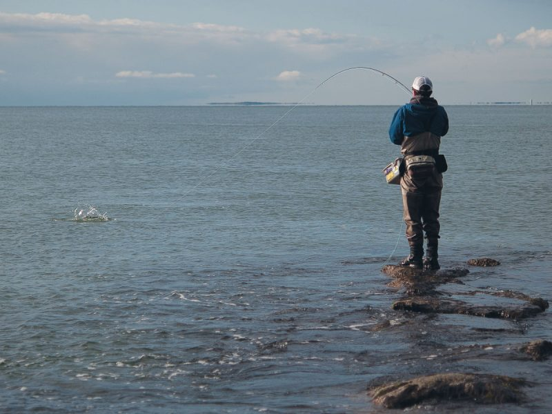 Fly fishing for schoolies