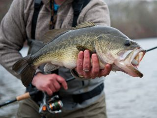 Surfcasting For Largemouths
