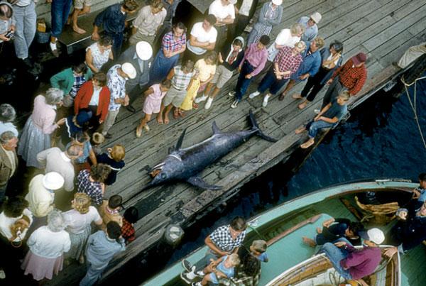 swordfish at Dutcher Dock