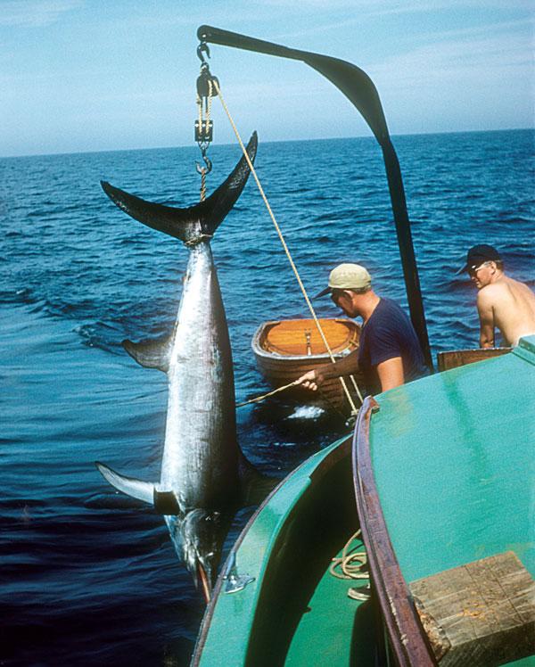 swordfish over the rail