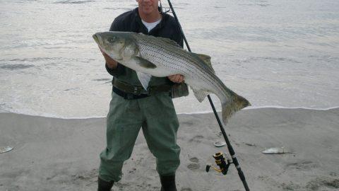 Bill Bertsch 31-pound striped bass