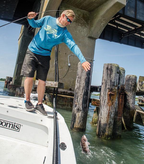 New Jersey back bay blackfish