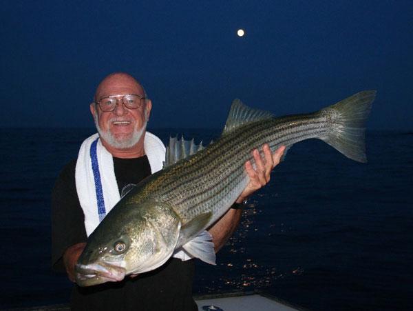 Montauk July striped bass
