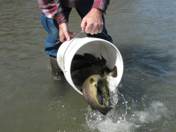 trout stocking