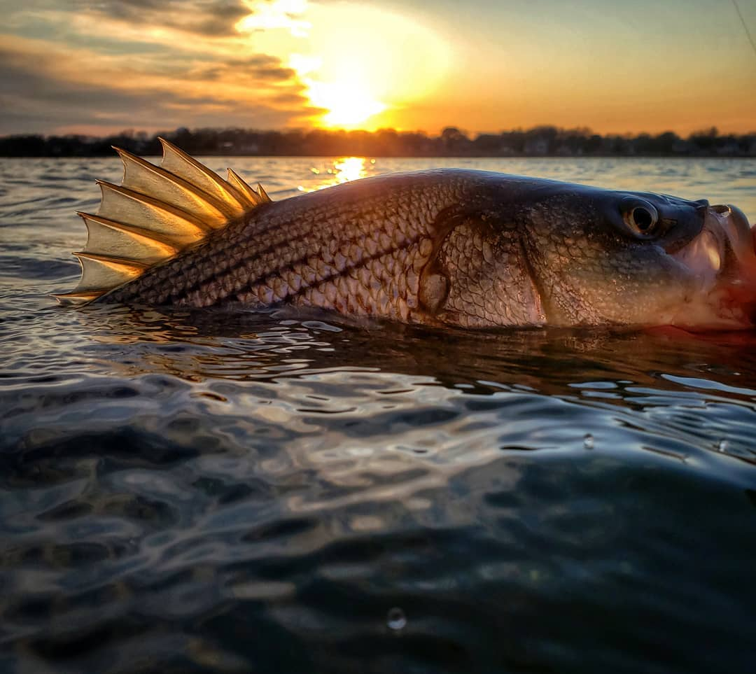 Southern New Jersey Fishing Report