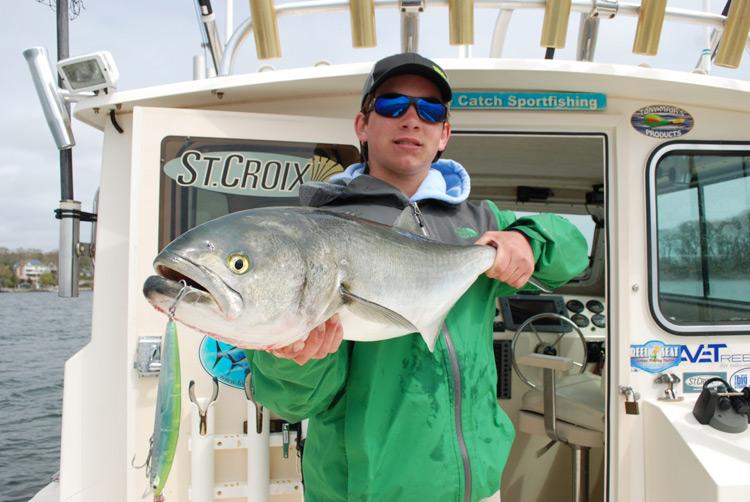 Daiwa SP Minnow bluefish