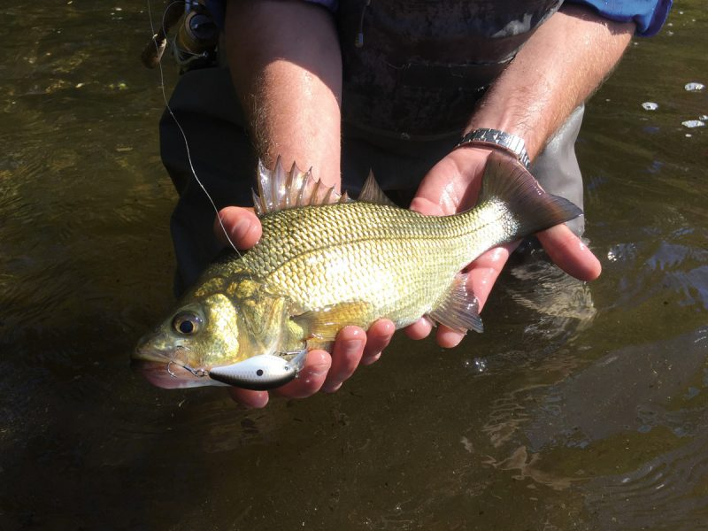 micro crankbait white perch