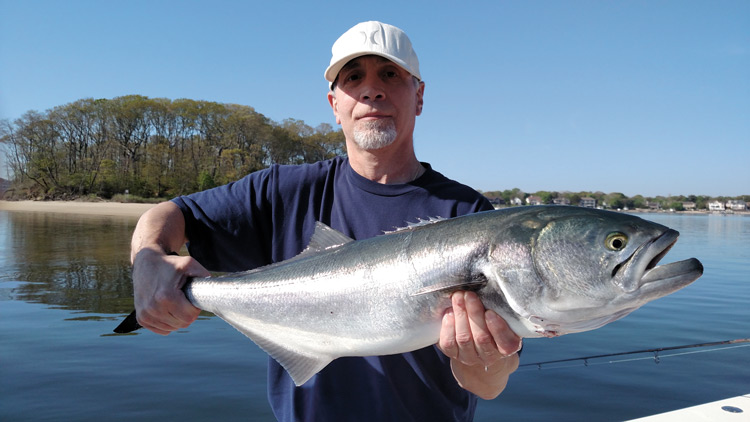 shallow waters bluefish