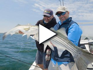 Big Striped Bass on Topwater Lures
