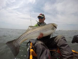 Giglio's Bait and Tackle striped bass