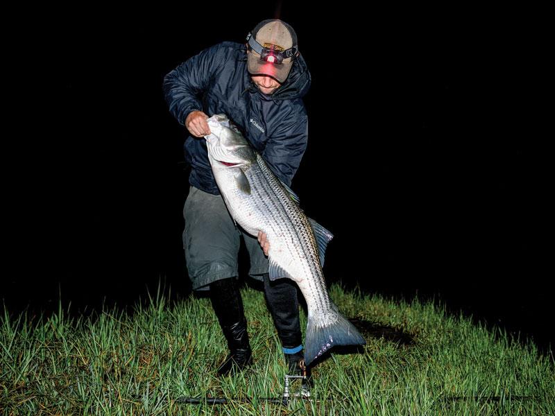 backwater striper