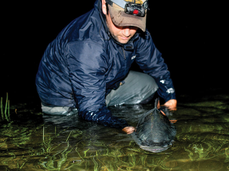 release of a big, backwater striper