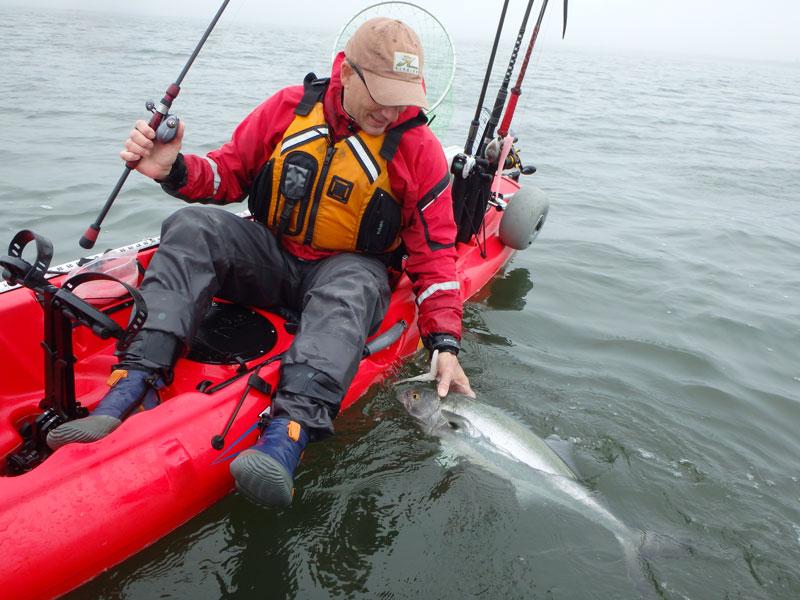 kayak bluefish