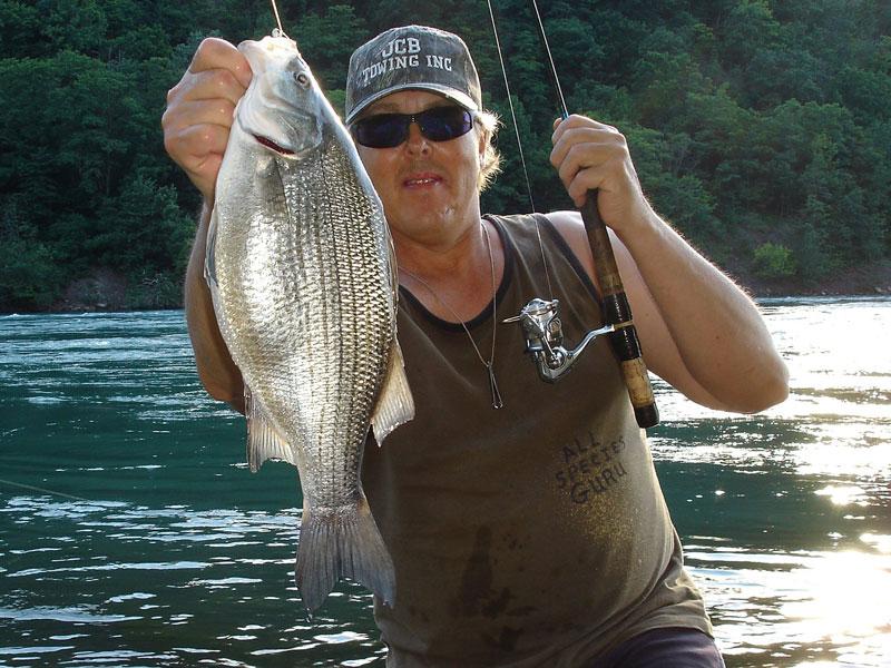 Mike Rzucidlo white bass
