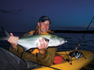 kayak bluefish