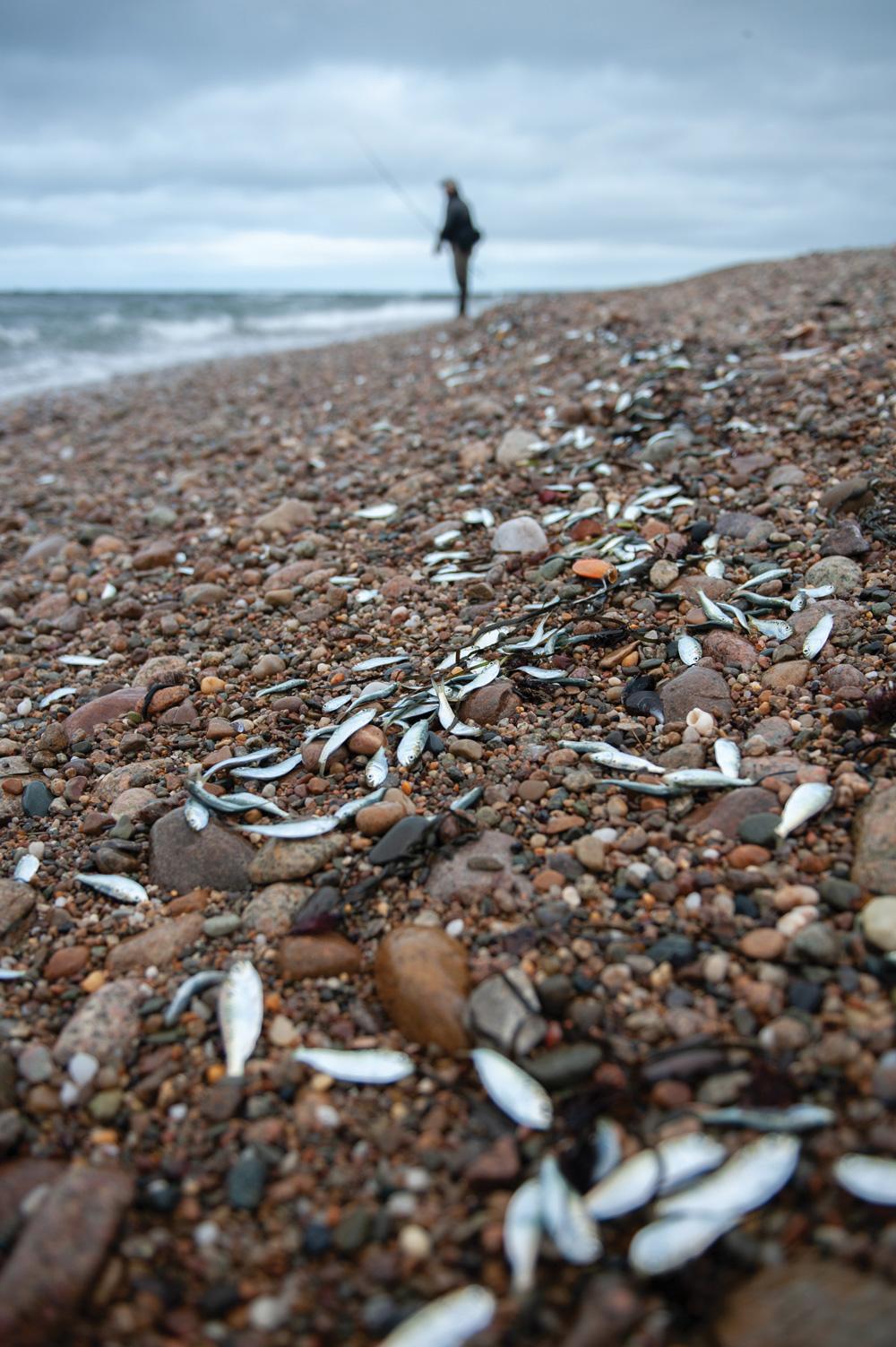 bait on the beach