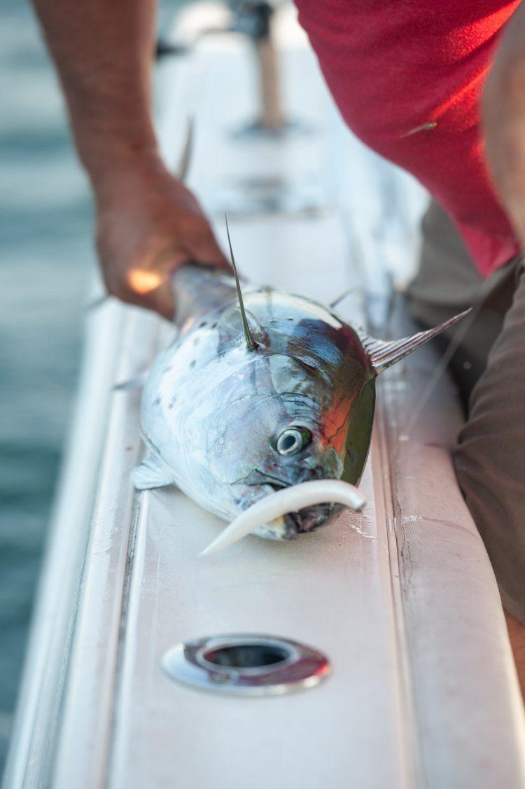 Small soft plastics imitate many small baitfish.