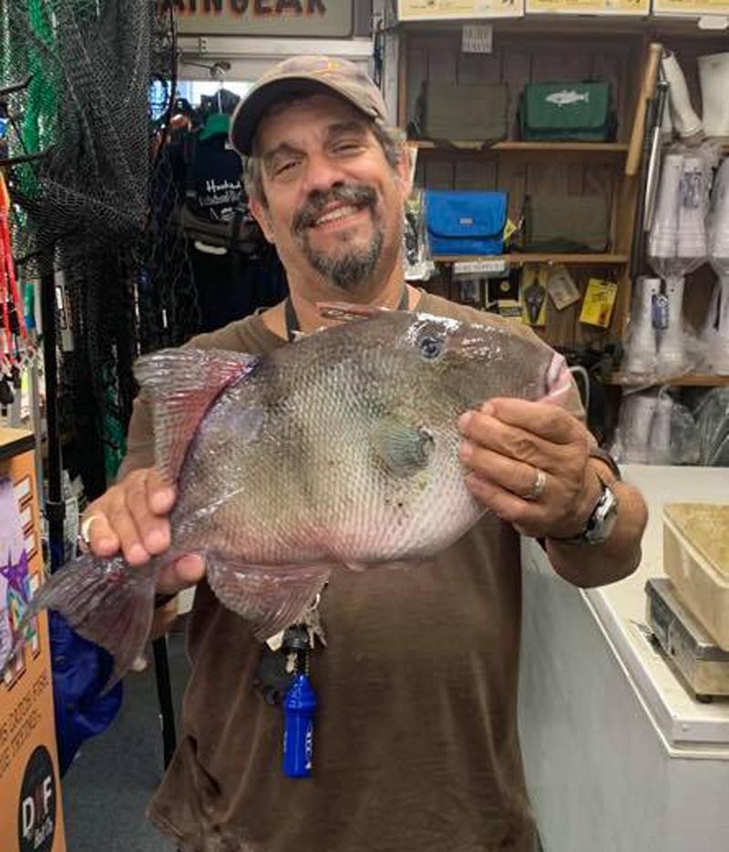 Drew triggerfish