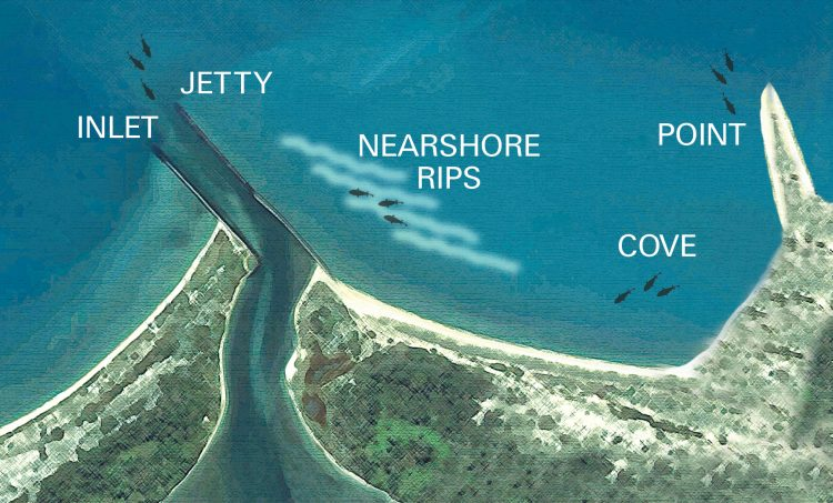 Inlets, jetties, points, and coves are good places to find false albacore.