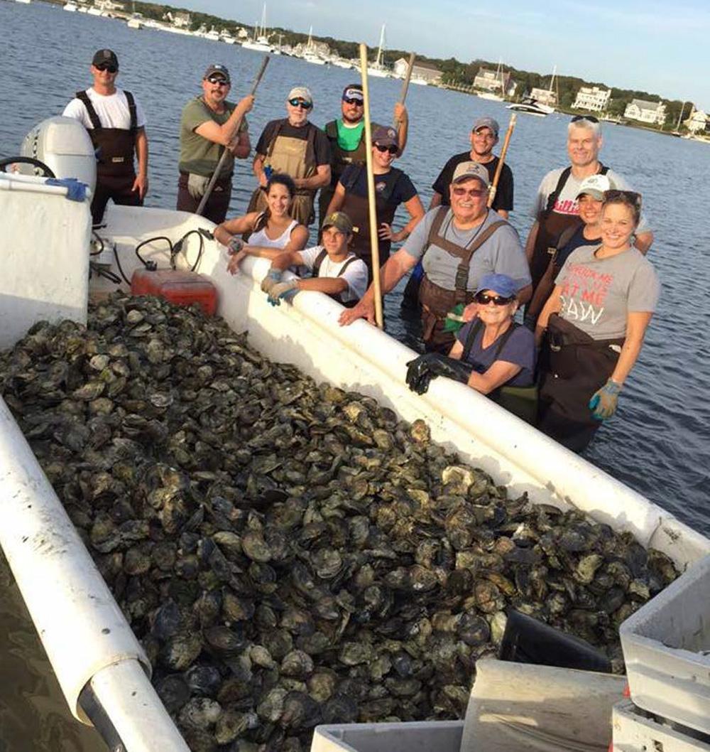 oyster farm volunteers